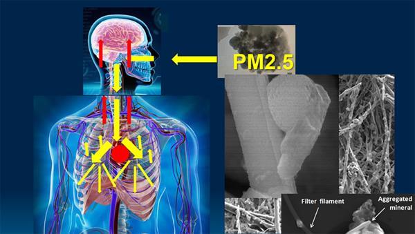 ราชวิทยาลัยอายุรแพทย์ฯห่วง ! จากกรุงเทพฯถึงเชียงใหม่ค้นหาความจริงฝุ่นพิษมรณะ PM2.5