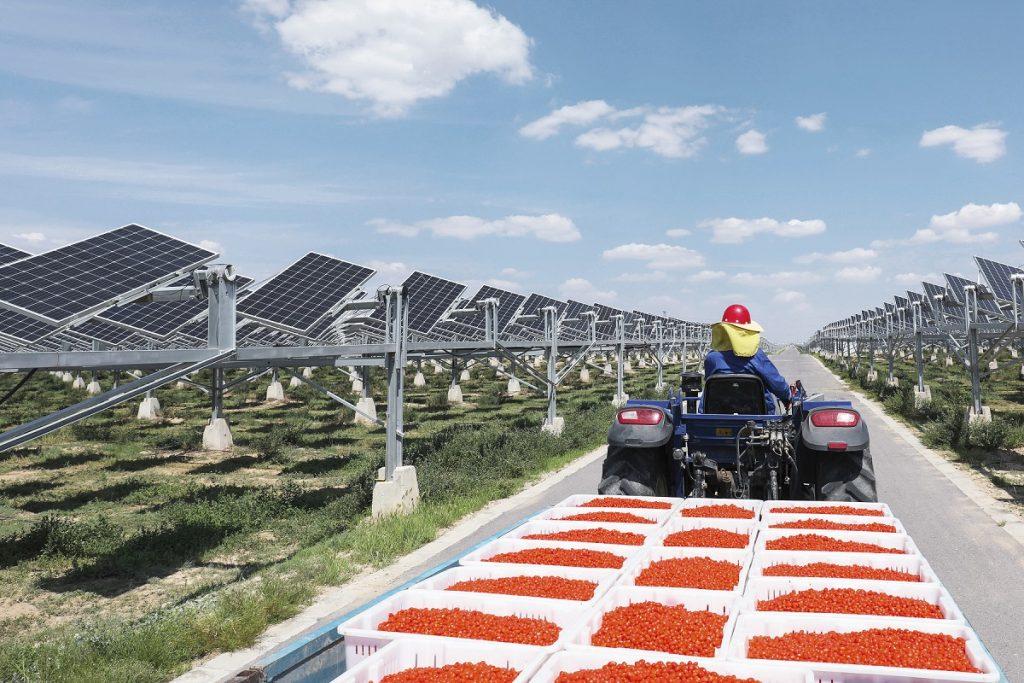 พลังงานแสงอาทิตย์อัจฉริยะมอบชีวิตใหม่ให้ทะเลทรายในจีน